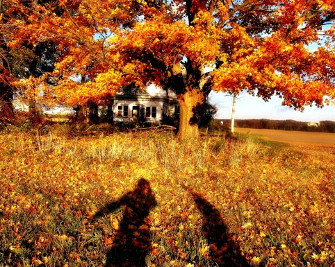 DSC00188 Orange Leaves and Shadows