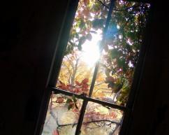 Creeping Vine Window