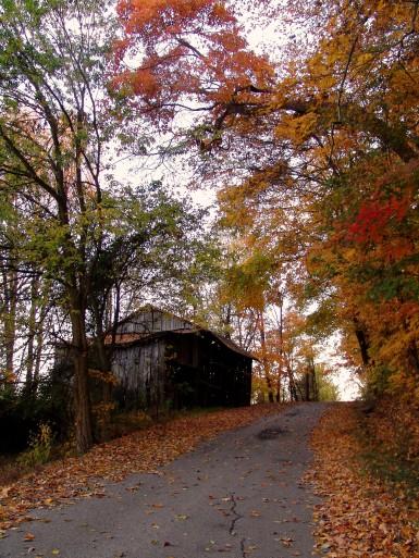DSC04613 Lucinda Wood Hollow