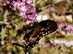 Butterfly and Bush