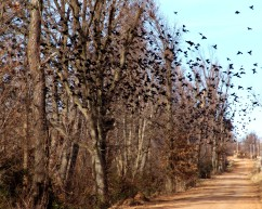 Birds, Trees and the Country Road