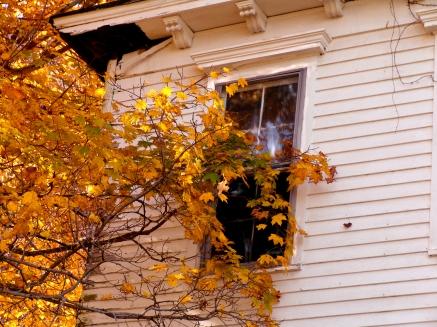 DSC09187 Autumn Window