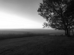 IMG_2739 Autumn Fog 1