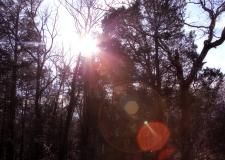 IMG_3335 Sun spirits 2