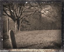 Old Tree and Grave