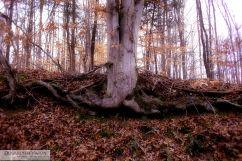 Autumn Tree Roots