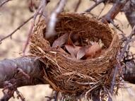 DSC07999 Winter bird nest