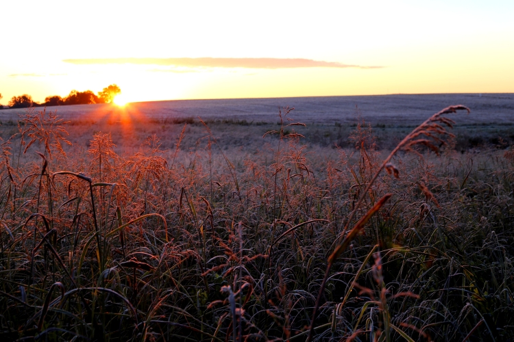 IMG_2290 ice field sunrise