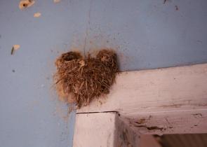 IMG_3468 GJA heart shaped nest