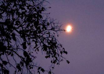 IMG_6120 Marrowbone Moon