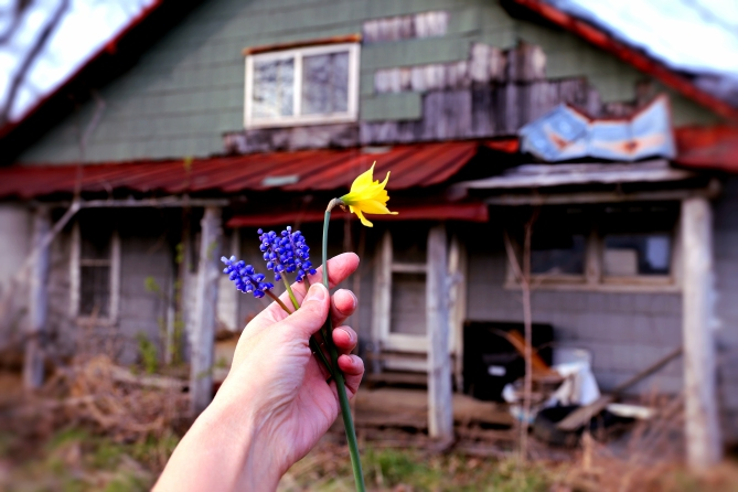 IMG_0834 Spring Flowers