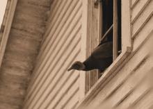 IMG_5077 Vulture Attic 2