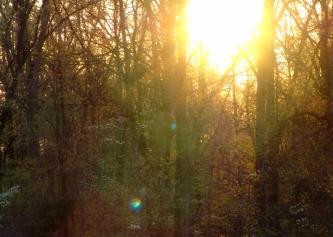 DSC05672 Spring Forest