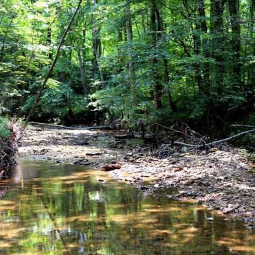 IMG_1423 summer creek 2