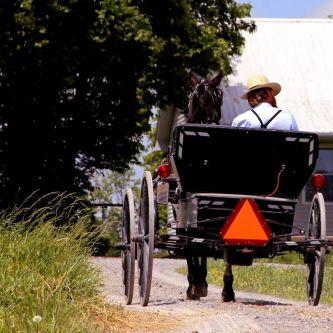 IMG_4521 Ruben Riding a Buggy
