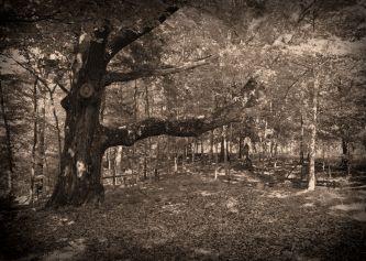 IMG_4596 The Old Tree Daguerrreotype