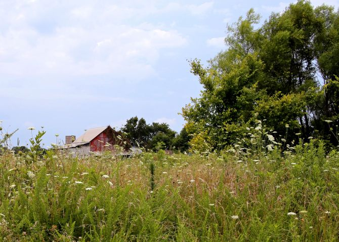 IMG_4706 Summer Barn