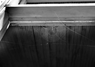 IMG_6875 spider web 2