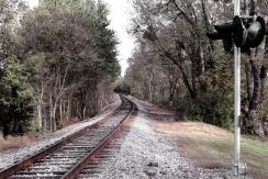 img_2183 rails in autumn