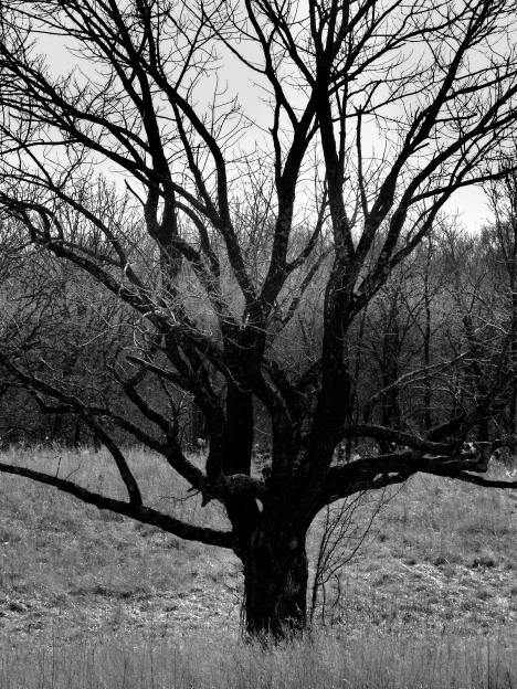 DSC04245 lightning tree