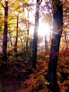 DSC04604 Sugar Forest Light