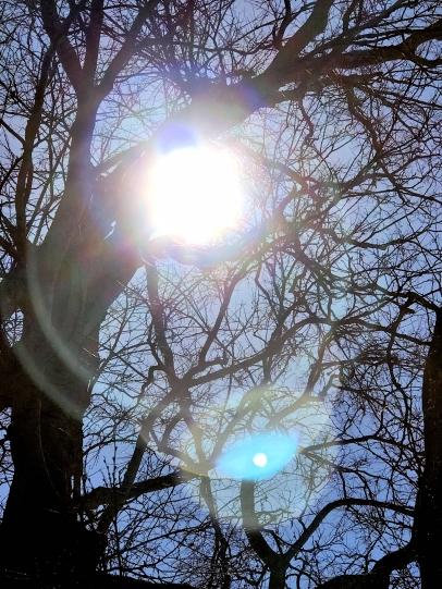 IMG_4032 Sun glow tree