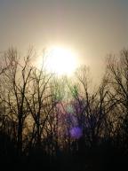 DSC04878 Dark Sun Forest