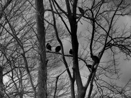 DSC04895 Dark Birds