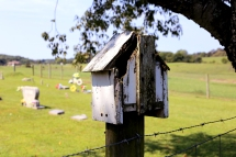 IMG_1460 Bird house at cemetery 4
