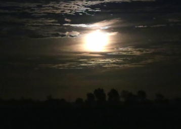 IMG_1827 Harvest Moon