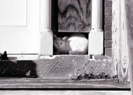 IMG_5764 White Cat Hiding in Door Frame