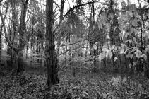 IMG_8787 Joppa Cemetery Forest