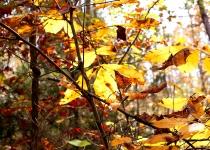 IMG_2364 Trees