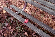 IMG_2368 red leaf bench
