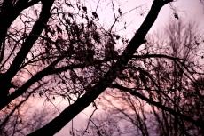 IMG_1295 Autumn eve tree