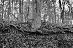 IMG_3567 Decembers Roots