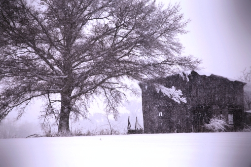 IMG_3785 Snowstorm, Barn and Old Tree