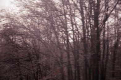 IMG_1511 winter woods