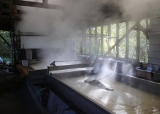 img_4296-sorghum-steam