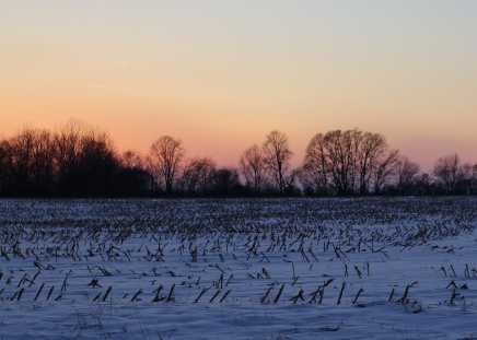 IMG_3059 Snow in the winter corn field