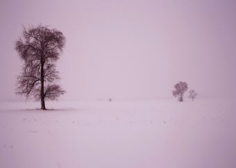 IMG_3784 Lonely Snow Tree Field