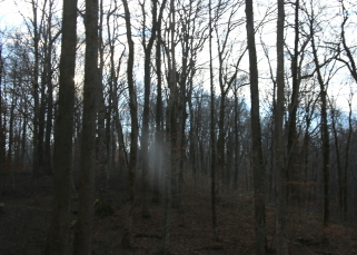 IMG_5858 Apparition Woods