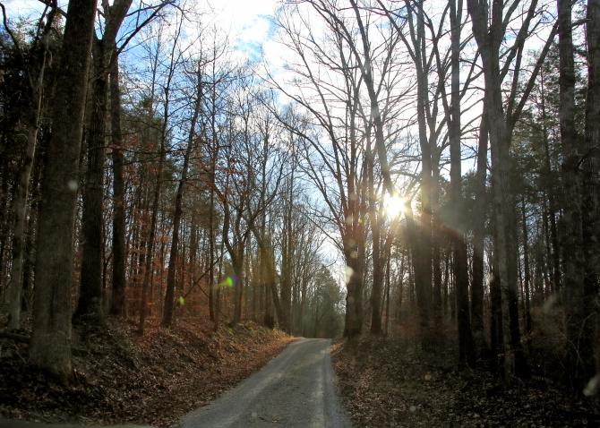 IMG_5874 Winter Woods