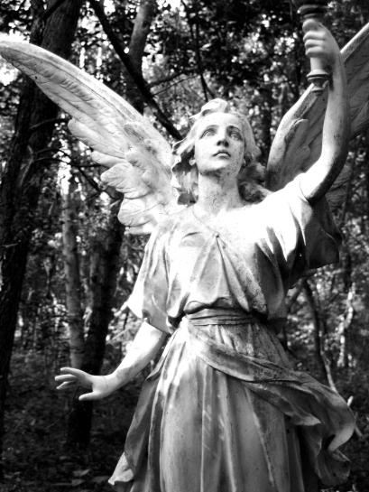 DSC01975 Wings in dark forest